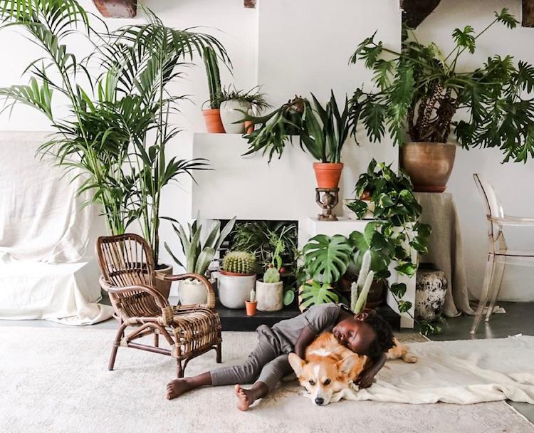 Plantas en casa como elemento decorativo